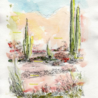 Arizona desert landscape #623A pen & ink garden watercolor with it's view of cactus flowers, and grasses.