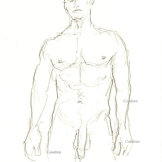 Nude gay male 449A pencil drawing standing with large uncut flaccid penis and harry balls.